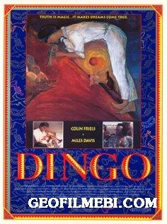 დინგო | Dingo