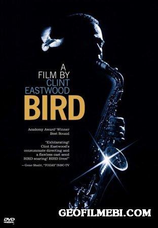 ჩიტი | Bird [ქართულად]